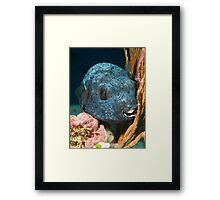 Blackspotted pufferfish portrait Framed Print