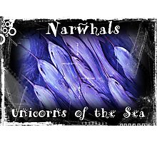 Narwhals Unicorns of the Sea Photographic Print