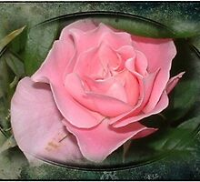 Cottage Rose by Maree  Clarkson
