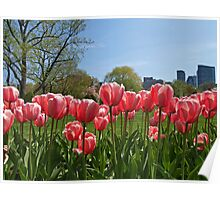 Pink Tulips in The Garden Poster