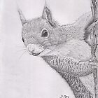 squirrel by Damian May