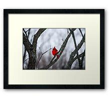 Cardinal In A Snow Storm Framed Print