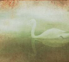 Dreamy swan by Mustafa UZEL