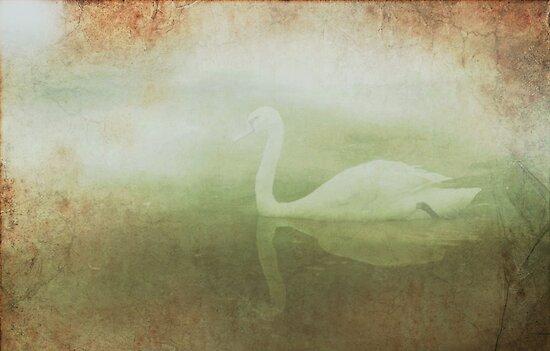 Dreamy swan by Mustafa UZEL