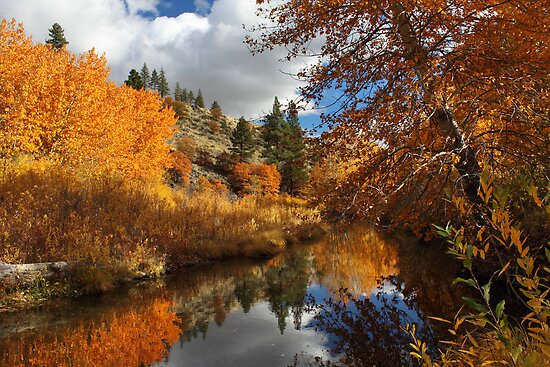 Susan River Reflections by James Eddy