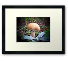 Spring Fungi Framed Print