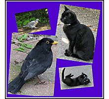 Natural Enemies - Cats and Birds Collage Photographic Print