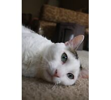 Kitteh Photographic Print