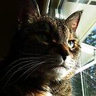 My Sweet Girl by jodi payne