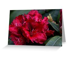 Rhododendrons Bloom Greeting Card