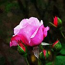 Pink Rose Oil Painting by D R Moore