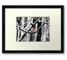 Purple Finch Framed Print