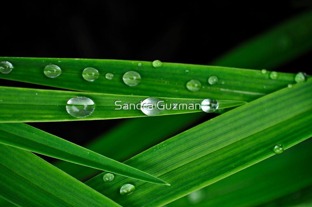 Tear drops by Sandra Guzman
