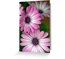 African Pink Daisies Greeting Card