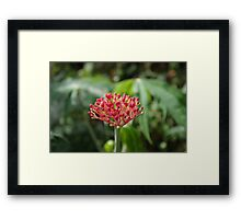 Some flowers, about to bloom Framed Print