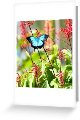 Tropical Treat - Ulysses butterfly by Jenny Dean