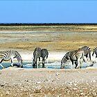 Zebras on Etosha Pan by Graeme  Hyde