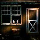 Coop by Ted Byrne