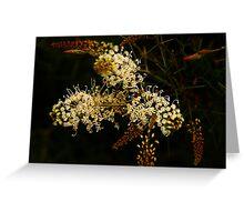 Grevillea leucoclada Greeting Card