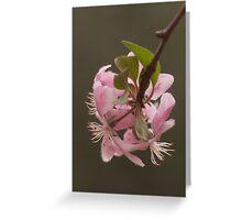 Crabapple in Bloom II Greeting Card