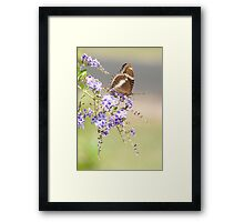 Geisha girl - butterfly feeding. Framed Print