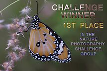 Banner Nature Photography Challenge Group by Liz Worth