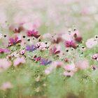 meadow by Anne Seltmann