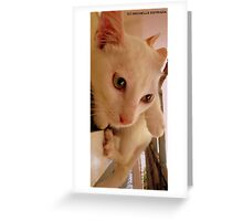 IMPECCABLE HEADSHOTS Greeting Card
