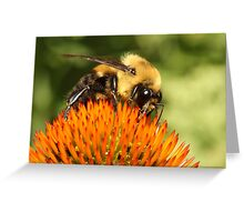 Big Bumble Bee Greeting Card