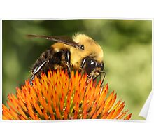 Big Bumble Bee Poster