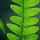fern fractal pattern by lensbaby
