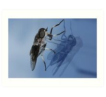 Fly and Reflections Art Print