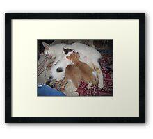 Ningnong and Kittens Framed Print