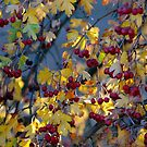Autumn Berries by Harry Oldmeadow