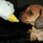 Dachshund Puppy by RainbowsEnd
