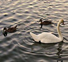 Ring Around The Rosy by Vince Scaglione