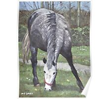 grey spotty horse in field Poster