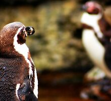 Penguin Hoy by MythicFX