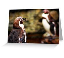Penguin Hoy Greeting Card