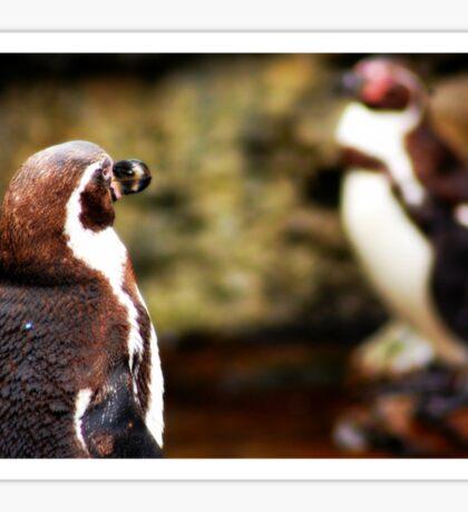 Penguin Hoy Sticker