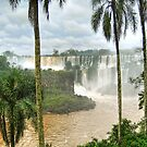 Palms at Iguazu, Argentina by Clint Burkinshaw