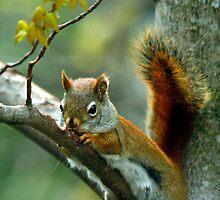 Gnawdy Squirrel by Brian Pelkey