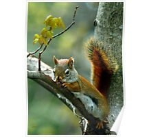Gnawdy Squirrel Poster