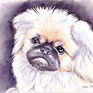 Pekingese by Anne Sainz