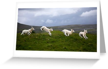 An Evening's Frolic In The Dales by SteveMG