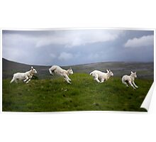 An Evening's Frolic In The Dales Poster