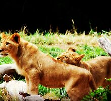 Lions A Pair by MythicFX
