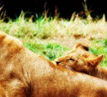 Lions A Pair Sticker