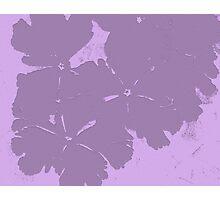 Primula Impression in Purple Photographic Print
