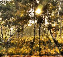 Dawn Light, Hill End by David Mapletoft
